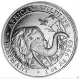 Somalia Elefant 1 Unze / 500er Box
